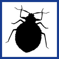 Zone Pest Bed Bugs management