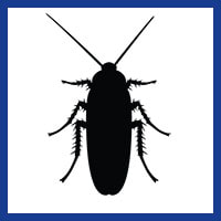 Zone Pest Cockroach Management