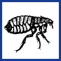 Zone Pest Flea Control