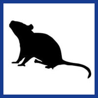 Zone Pest Rodent Management